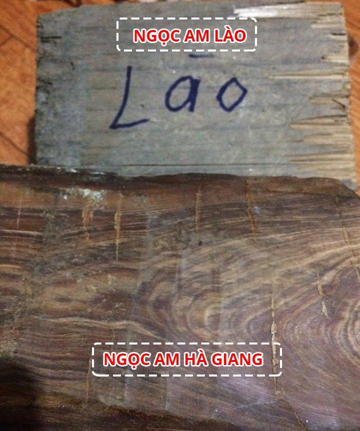 phân biệt gỗ ngọc am hà giang và gỗ ngọc am lào